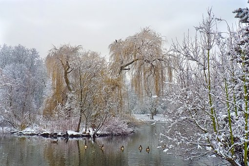 Winter, Snow, Wintry, White, Tree, Cold, Nature