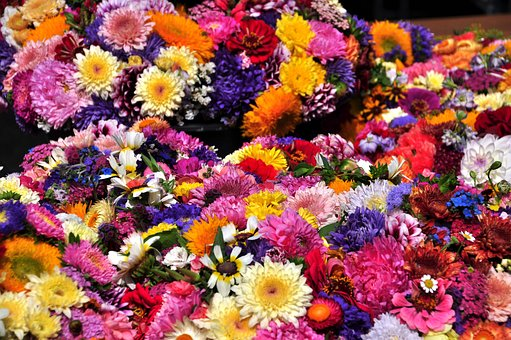Autumn Flowers, Asters, Straw Flowers, Colorful