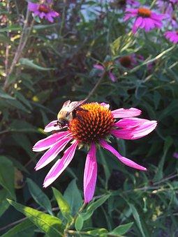 Flower, Floral, Garden, Natural, Bee, Bumblebee