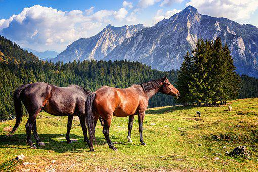 Horse, Horses, Nature, Alpine, Mountains, Mammal