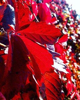 Autumn, Nature, Sun, Flowers, Plants, Vine, Grapes