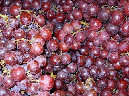 Grapes, Purple, Fruit, Healthy, Vine