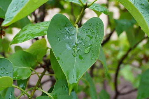 Rain, Closeup, Wet, Tree, Condensation, Brightly