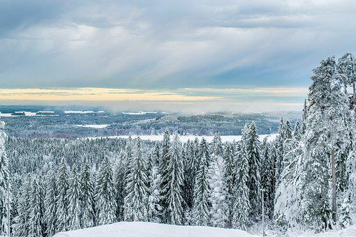 Forest, Winter, Six, Snow, Finnish, Nature, Snowy