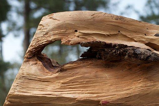 Wood, Hole, Weathered, Hardwood