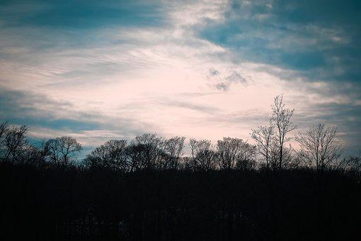 Trees, Winter, Forest, Nature, Landscape, Mood, Clouds