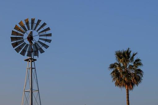 Windmill, Palm Tree, Countryside, Paralimni, Cyprus
