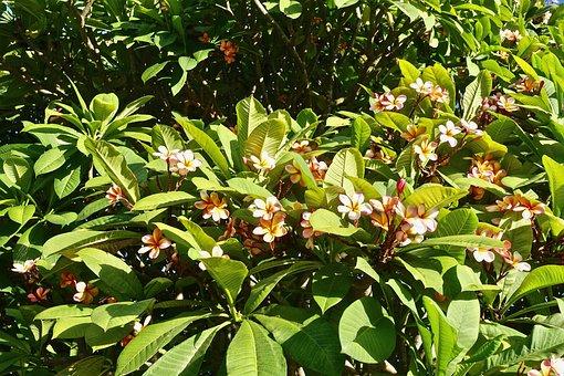 Blooming, Flowering, Flowers, Bush, Blossom, Spring