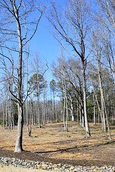 Barren Trees, Forest, Outdoors, Landscape, Nature