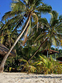 Palm Trees, Sand, Thailand, Bungalow, Vacation