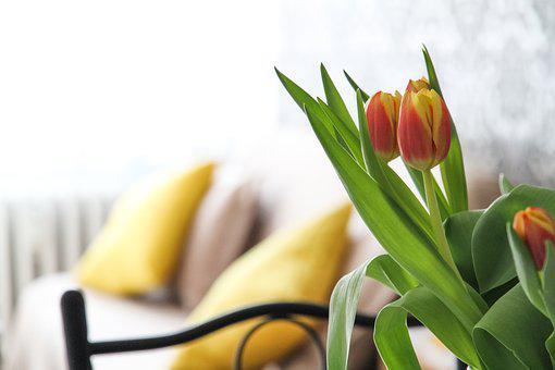 Apartment, Flowers, Tulips, Room, House