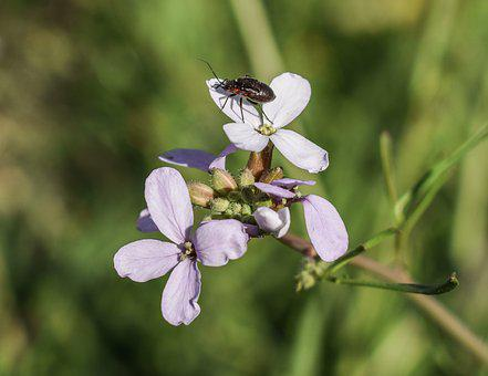 Wildflower, Beetle, Insect, Nature, Flower, Plant