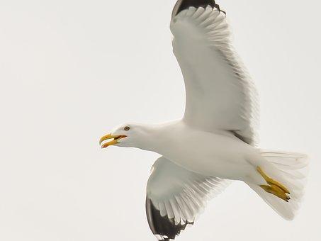 Seagull, Sea, Aegean, Greece, Bird, Gull, Nature, Blue