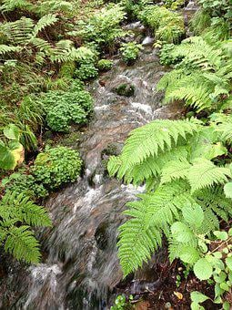 Running Water, Water, Brook, Plant, Plateau