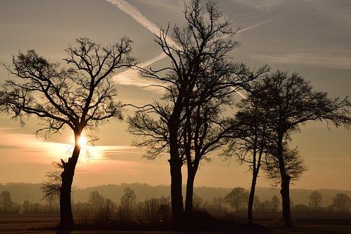 Trees, Kahl, Bald Trees, Sunrise, Morning, Awakening