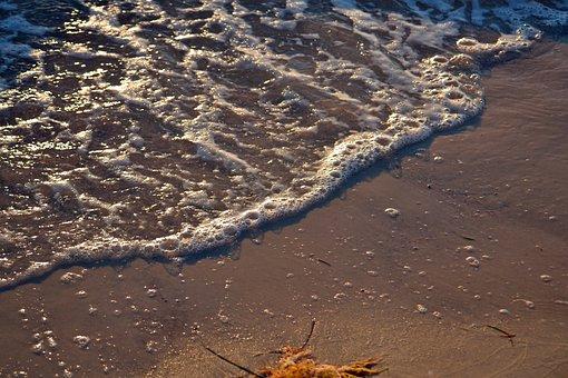 Ocean, Wave, Shore, Beach, Surf, Ocean Waves
