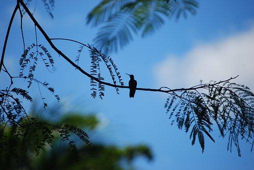 Birds, Silhouette, Nature, Wildlife