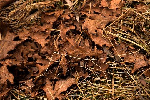 Leaves, Autumn, Fall Foliage, Leaf, Macro, Forest