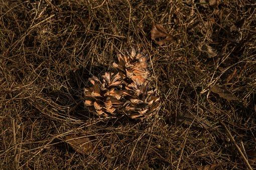 Pine Cones, Tap, Dry, Brown, Ornament, Decoration