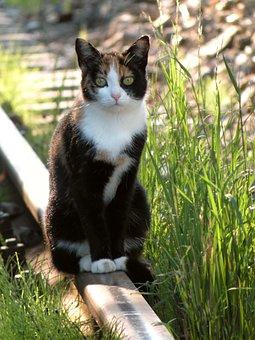 Cat, Rail, Track, Train, Railway, Mieze, Animal