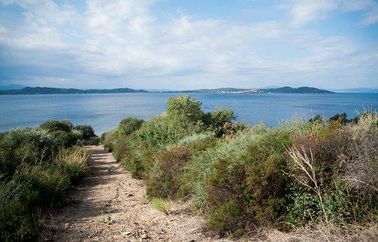 Sea, Beach, View, Nature, Bushes, Horizon, Blue Sky