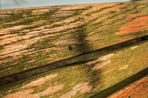 Ladybug, Bank, Summer, Orange, Summer Lighting, Rest