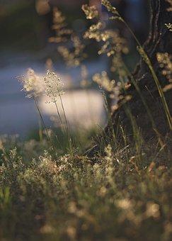 Nature, Grass, Spring, Bokeh