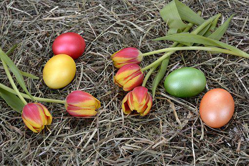 Egg, Color, Cooked, Easter, Decoration, Tulips, Flowers