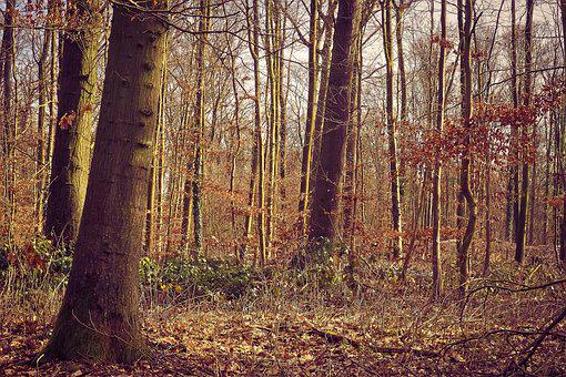 Forest, Trees, Nature, Landscape, Green, Outdoor