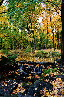 Autumn, Park, Foliage, Spacer, Tree, Forest, October