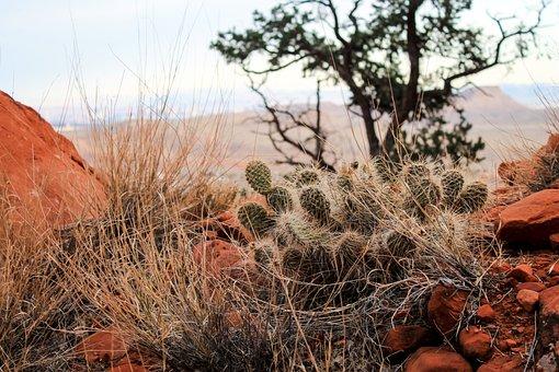 Utah, Red Rocks, Red, National, Park, Usa, Desert