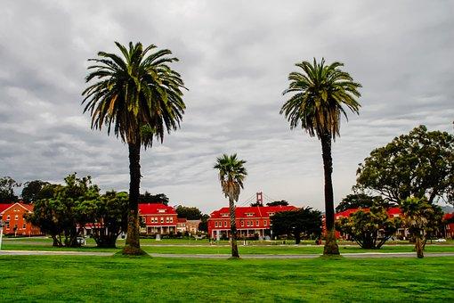 Presidio, Saf Francisco, Palms, California, Tree