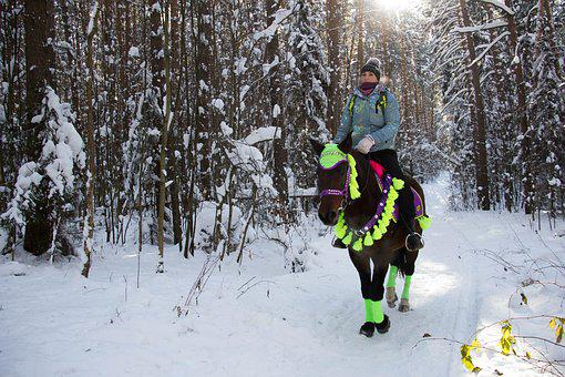 Winter, Forest, Horse, Riders, Stroll, Nature
