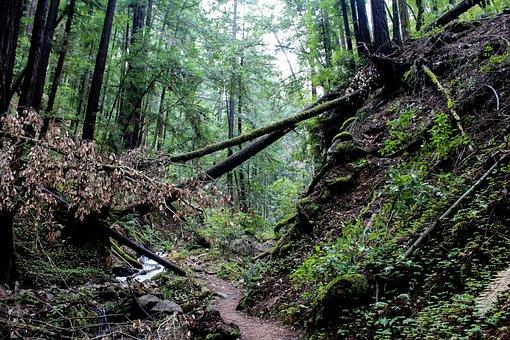 Forest, Usa, California, Nature, Park, Landscape