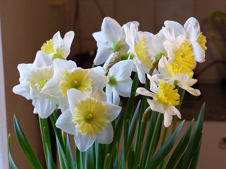 Spring, Flowers, White, Yellow, Colors, Green, Bulbs