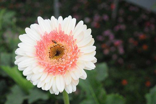 Bee On Flower, White Flower, Nature, Blossom, Honey