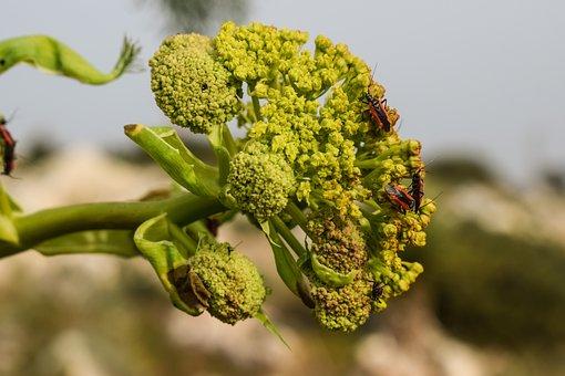 Inflorescence, Flower, Beetles, Plant, Nature