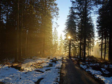 Forest, Nature, Trees, Mood, Winter, Fog, Sun, Morning