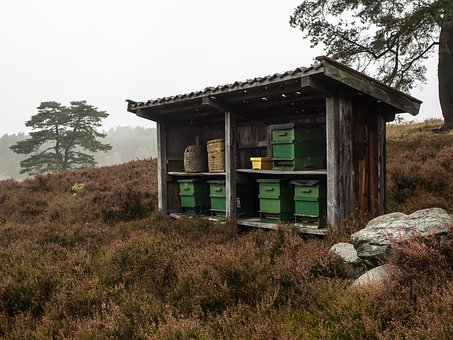 Beehive, Heathland, Nature Reserve, Lüneburg Heath