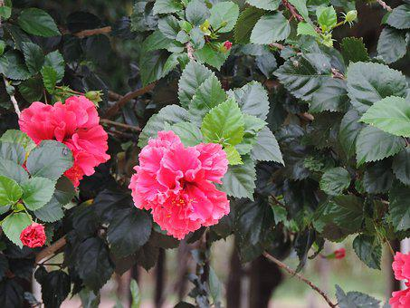 Flowers, Network, Pink, Flower, Nature, Red Flower, Red