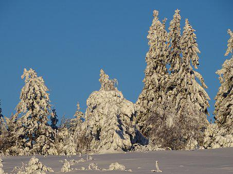 Winter, Winter Forest, Snow, Wintry, Nature, Snowy