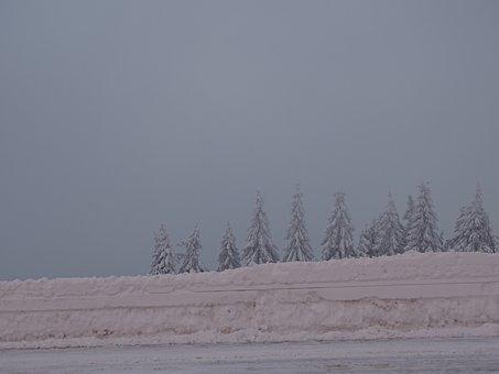 Winter, Trees, Wintry, Snow Landscape, Snowy, Forest