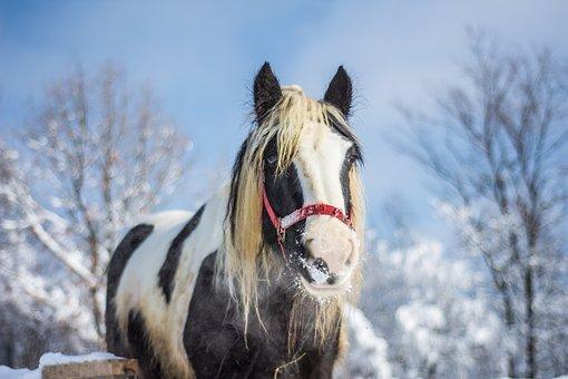Horse, Farm, Winter, Nature, Animal, Ranch, Rural