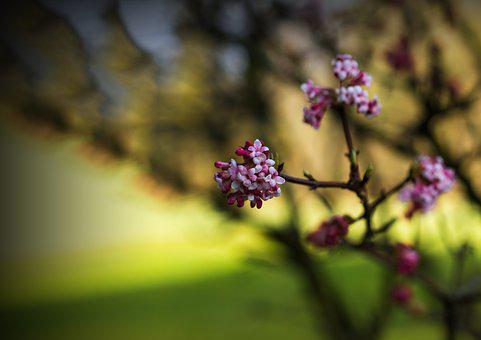 Spring, Nature, Plant, Flowers, Branch, Bokeh, Bloom