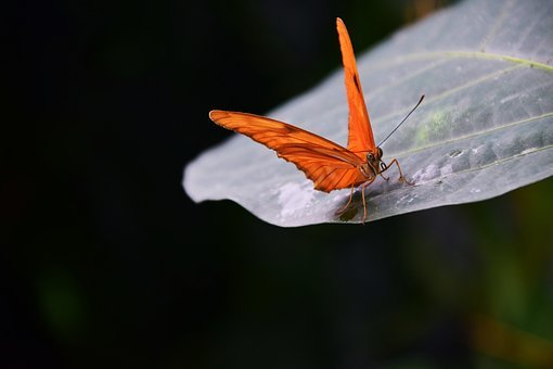 Butterfly, Orange, Insect, Nature, Close, Alive