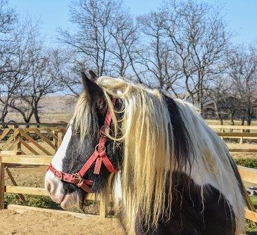 Horse, Farm, Outdoor, Nature, Animal, Ranch, Domestic