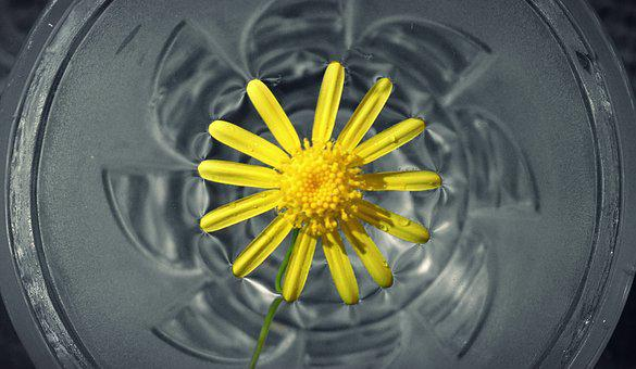 Flower In Water, Flower, Yellow, Nature, Water