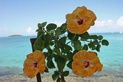 Guadeloupe, Hibiscus, Sea