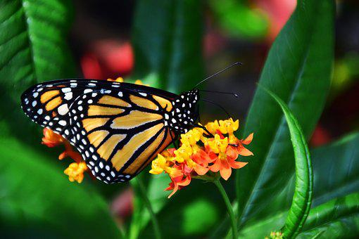 Butterfly, Insect, Wing, Tropical, Exotic, Close