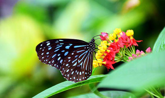 Butterfly, Colorful, Insect, Wing, Animal, Color